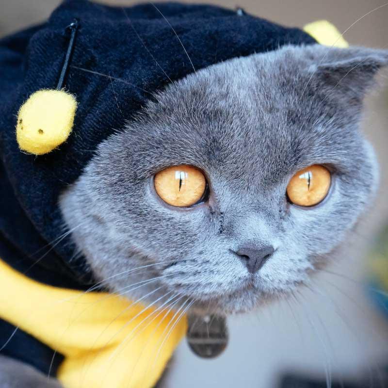 Windsor Cat Sitting Worker Bee Package