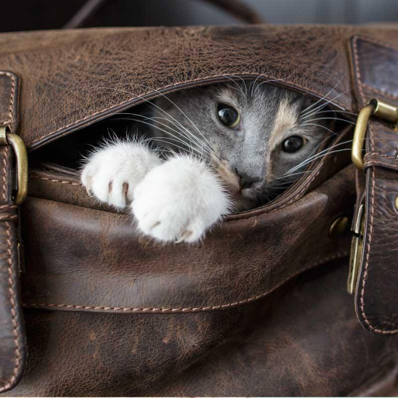 WIndsor Cat Sitting Weekend Get Away package